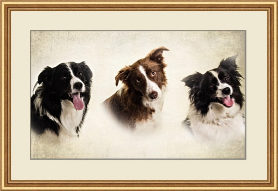 Pet Photographer in Lincolnshire