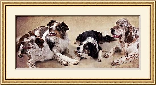 Sleaford pet photographer