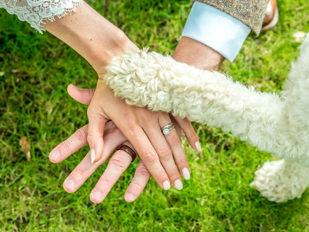 wedding rings shot with dogs paw